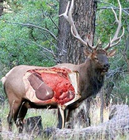 Elk 101 Kdfws